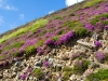 flowers-on-rock-the-pyrenees-mountains